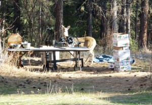 Daring Doe checks out the cider press