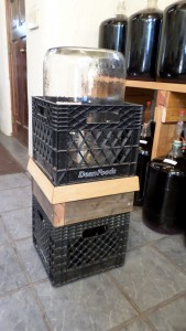 6.5 gallon carboy drying in crates separated by an insert.
